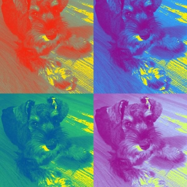 Pop Art Pet